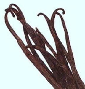 Laska Wanilii 1szt. ok.15cm. - 2828000684