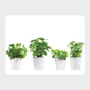 www.h-design.pl :: Zestaw 4szt. podkładek na stół Zioła Herbs 40x30cm, podkładki (1) - 2866112024