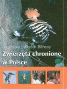 Zwierzęta chronione w Polsce - 2833194820