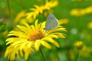Fototapeta kwiat, kwiaty polne 332 - 2829823708
