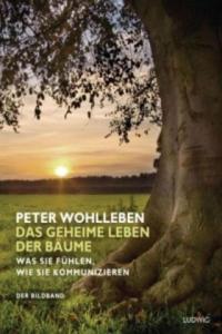 Das geheime Leben der Bäume - 2842739310