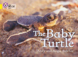 Baby Turtle - 2826821487