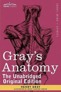 Gray's Anatomy - 2879057795