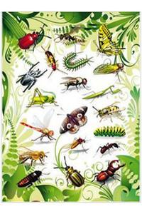 Naklejki HERMA Magic 3231 owady x1