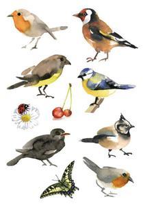 Naklejki HERMA Decor 3351 polskie ptaki x1