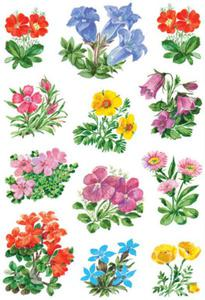 Naklejki HERMA Decor 3582 górskie kwiaty x1