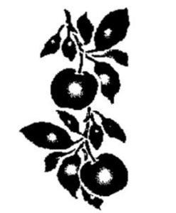 Szablon wielokrotnego użytku A5 - jabłuszka x1