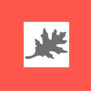 Dziurkacz ozdobny 1,6 cm - liść dębu x1