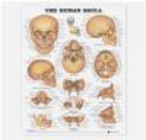 Human Skull Chart - 2822223179