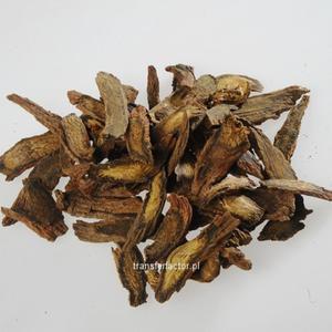 Dan Shen - Radix Salviae Miltiorrhize - Korzeń szałwia miltorrhiza 100g - 2841272066