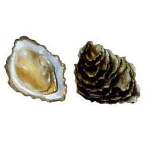 Ostrygi Fine de Claire, rozmiar 'M', z Francji, koszyk 50 szt. - 2822712660