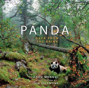 Panda: Back from the Brink - 2826045036
