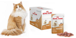 ROYAL CANIN INTENSE BEAUTY 12x85g - 2823050599