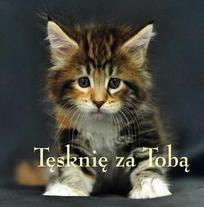 ZIARENKA - 17 Tęsknię za tobą - 2832214884