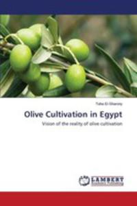 Olive Cultivation In Egypt - 2857253433