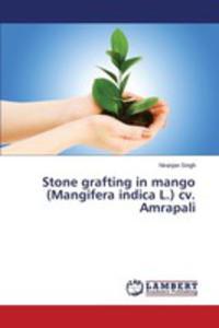 Stone Grafting In Mango (Mangifera Indica L.) Cv. Amrapali - 2857251783