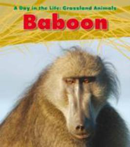 Baboon - 2839899400