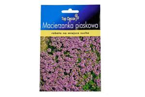 Macierzanka piaskowa Creeping Thyme- Top Decor ND54780 - 2874474595