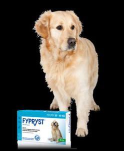 KRKA Fypryst Spot-On dla psów 20-40 kg 3 pipety - 2822930729