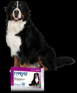 KRKA Fypryst Spot-On dla psów 40-60 kg 3 pipety - 2822930731