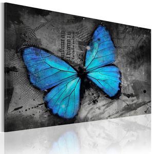 Obraz - Studium motyla OBRAZ NA P - 2856740725