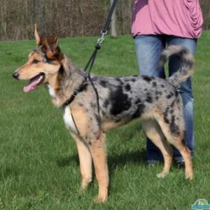 TRIXIE Szelki EasyWalk dla psa - 2833049588