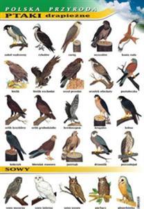Sklep Visualsystem Ptaki Drapieżne