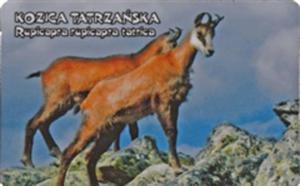 Kozica tatrzańska - magnes - 2832905587