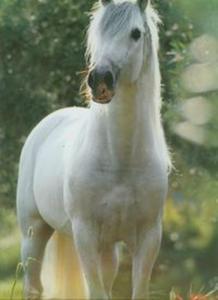 Kalendarz 2013 RW 22 Konie w obiektywie - 2825770642