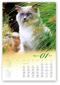 Kalendarz 2016 RW Koty domowe - 2825883410