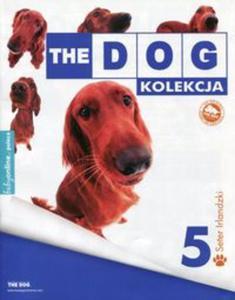 Dog Kolekcja 5 Seter Irlandzki - 2857749114