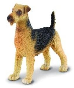Pies airedale terier - 2857825737