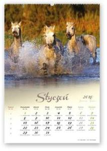 Kalendarz 2018 RW 29 Konie w obiektywie - 2857839016